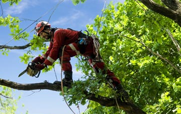 find trusted rated Ruislip tree surgeons in Hillingdon