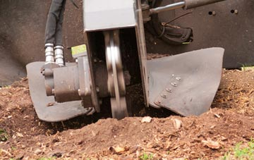 stump grinding vs stump removal