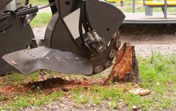 professional Ruislip stump grinding services