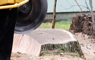 tree stump grinding Ruislip, Hillingdon
