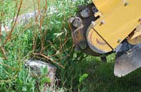 free Ruislip tree stump grinding quotes
